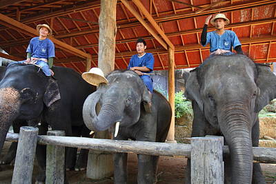 Elephant Photograph - Elephant Greeting - Maesa Elephant Camp - Chiang Mai Thailand - 01132 by DC Photographer