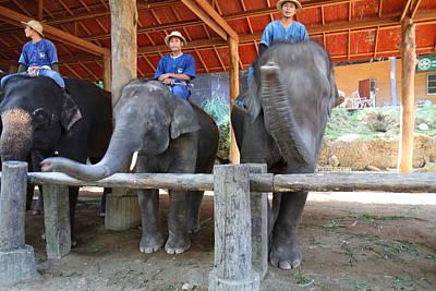 Camp Photograph - Elephant Greeting - Maesa Elephant Camp - Chiang Mai Thailand - 01135 by DC Photographer