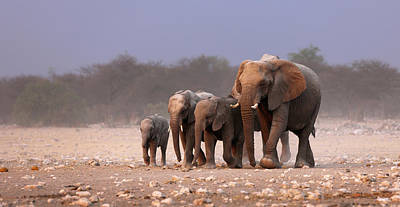 Animals Royalty-Free and Rights-Managed Images - Elephant herd by Johan Swanepoel