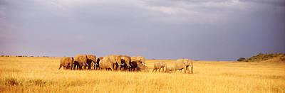 Elephant Herd, Maasai Mara Kenya Art Print