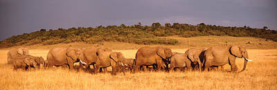 Elephant Herd On A Plain, Kenya, Maasai Art Print by Panoramic Images