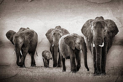 Photograph - Elephant Herd Rock Texture by Mike Gaudaur