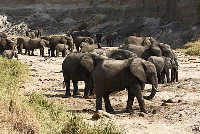 Loxodanta Photograph - Elephant Herd by Sally Weigand