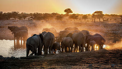 Tights Photograph - Elephant Huddle by Simon Van Ooijen
