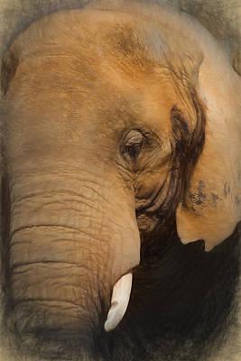 Digital Art - Elephant by Ian Merton