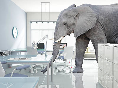 Photograph - Elephant In A Room by Gualtiero Boffi