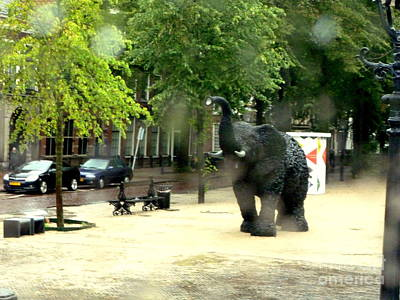 Photograph - Elephant In Town by John Potts