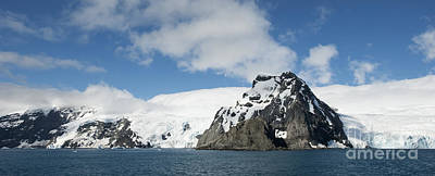 Animals Photos - Elephant Island, Point Wild, Antarctica by Steve Jones