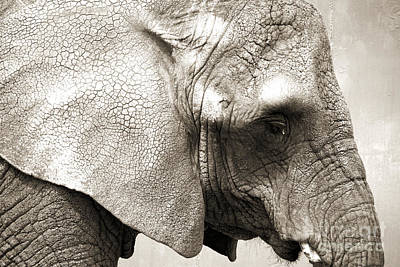 Photograph - Elephant by Jackie Farnsworth