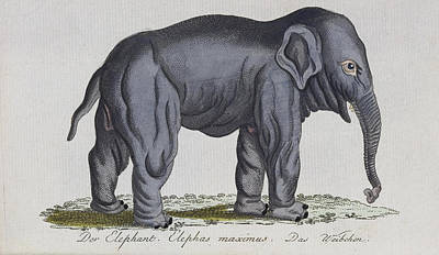 History Painting - Elephant by Celestial Images