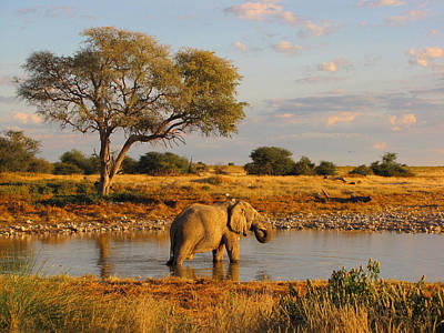 Photograph - Elephant Landscape by Karen E Phillips