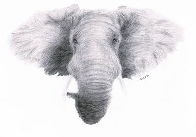 Drawing - Elephant by Lucy D