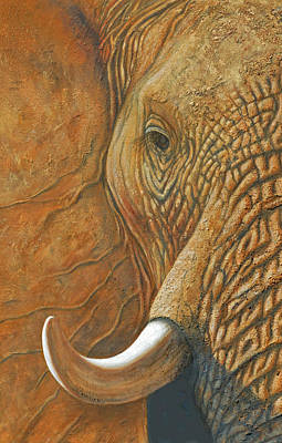 Painting - Elephant Matriarch Portrait Close Up by David Clode
