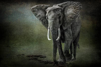 Elephant On The Rocks Art Print by Mike Gaudaur