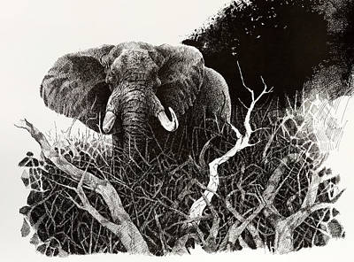 Elephant Art Print by Paul Illian