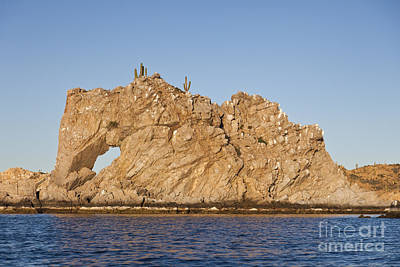 Baja Photograph - Elephant Rock Baja Califorina Sur  by Liz Leyden