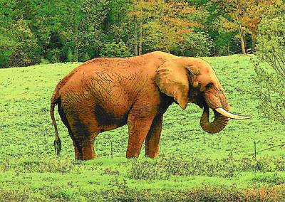Art Print featuring the photograph Elephant by Rodney Lee Williams