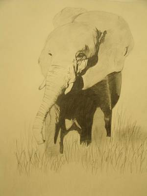 Drawing - Elephant by Samantha L