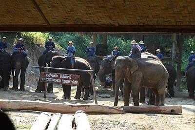 Show Photograph - Elephant Show - Maesa Elephant Camp - Chiang Mai Thailand - 01131 by DC Photographer