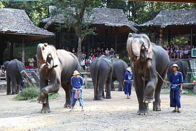 Elephant Photograph - Elephant Show - Maesa Elephant Camp - Chiang Mai Thailand - 011310 by DC Photographer