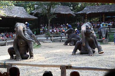 Elephant Photograph - Elephant Show - Maesa Elephant Camp - Chiang Mai Thailand - 011314 by DC Photographer