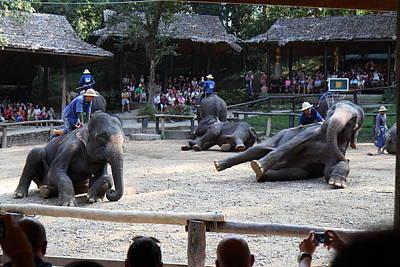 Elephant Show - Maesa Elephant Camp - Chiang Mai Thailand - 011315 Art Print
