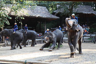 Elephant Show - Maesa Elephant Camp - Chiang Mai Thailand - 011320 Art Print