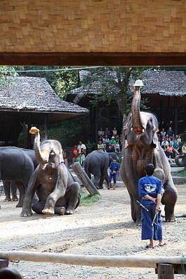 Elephant Show - Maesa Elephant Camp - Chiang Mai Thailand - 011321 Art Print by DC Photographer