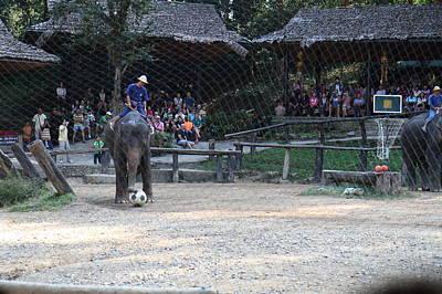 Show Photograph - Elephant Show - Maesa Elephant Camp - Chiang Mai Thailand - 011327 by DC Photographer