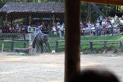 Show Photograph - Elephant Show - Maesa Elephant Camp - Chiang Mai Thailand - 011328 by DC Photographer