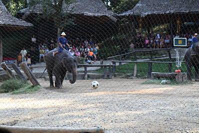 Elephant Show - Maesa Elephant Camp - Chiang Mai Thailand - 011329 Print by DC Photographer
