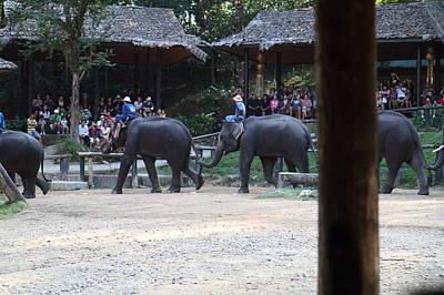 Elephant Show - Maesa Elephant Camp - Chiang Mai Thailand - 01133 Art Print by DC Photographer