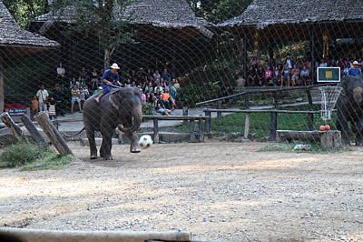 Elephant Photograph - Elephant Show - Maesa Elephant Camp - Chiang Mai Thailand - 011330 by DC Photographer