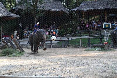 Elephant Show - Maesa Elephant Camp - Chiang Mai Thailand - 011332 Art Print by DC Photographer