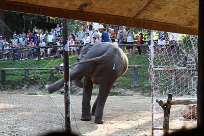 Show Photograph - Elephant Show - Maesa Elephant Camp - Chiang Mai Thailand - 011334 by DC Photographer