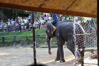 Elephant Show - Maesa Elephant Camp - Chiang Mai Thailand - 011335 Art Print