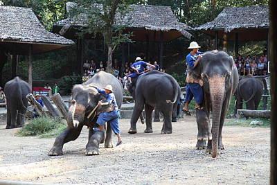 Camp Photograph - Elephant Show - Maesa Elephant Camp - Chiang Mai Thailand - 01139 by DC Photographer