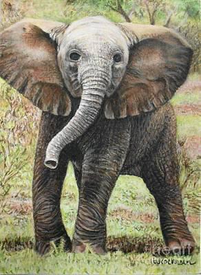 Elephant Side Step Original