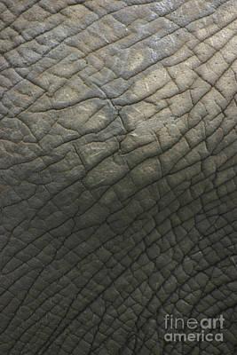 Elephant Skin Art Print