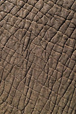 Zimbabwe Photograph - Elephant Skin, Zimbabwe by Pete Oxford