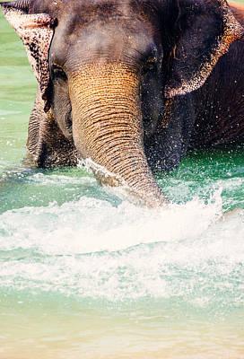 Elephant Splash Art Print by Pati Photography