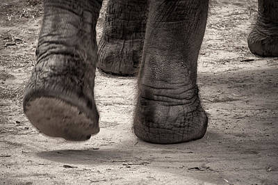 Photograph - Elephant Steps by Joan Herwig
