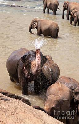 Pinnawela Photograph - Elephant Takes A Shower by Jane Rix