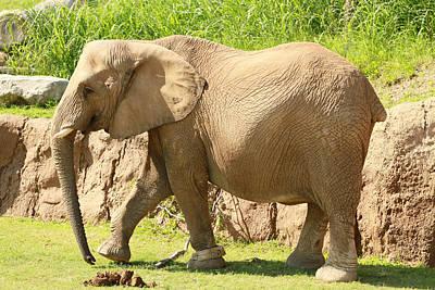 Elephant Art Print by Tinjoe Mbugus