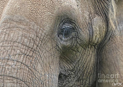 Photograph - Elephant Up Close by Wanda Krack