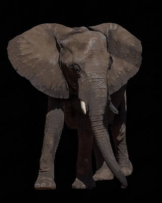 Digital Art - Elephant Walk by Ernie Echols
