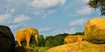 Photograph - Elephants Among The Rocks. by Jonny D