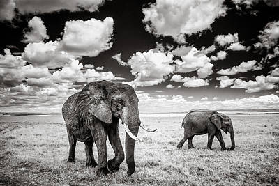Elephants And Clouds Art Print