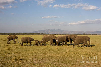 Art Print featuring the photograph Elephants At Lake Manyara by Chris Scroggins