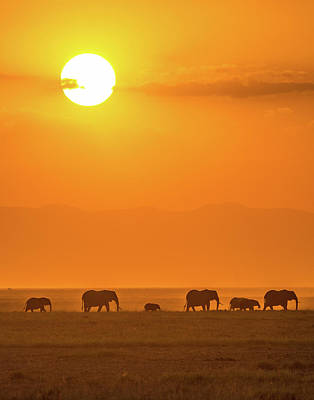 Kenya Wall Art - Photograph - Elephants At Sunset by Ted Taylor